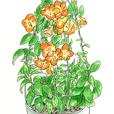オレンジ色の花 2月
