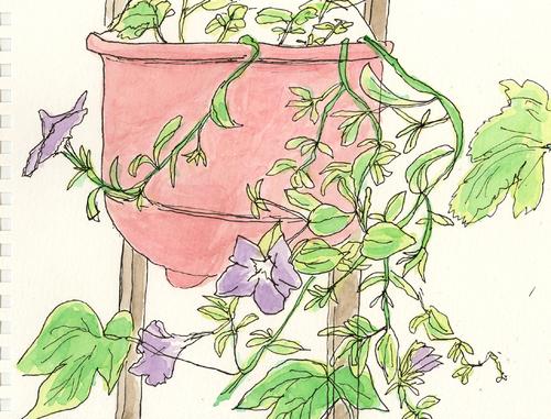 ベランダの花1 7月