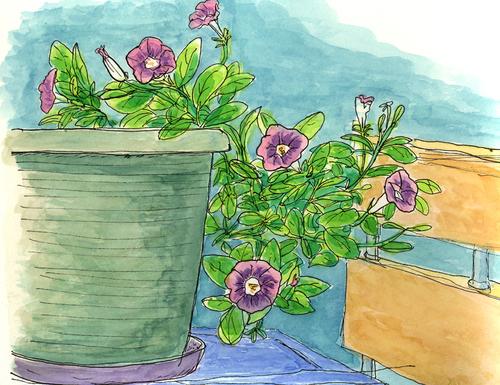 ベランダの花2 8月