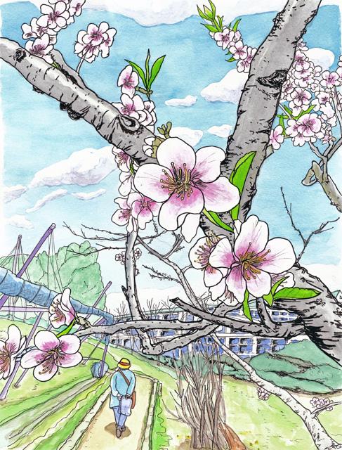 アーモンドの花 フルーツパーク 4月