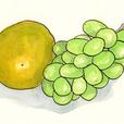 葡萄とグレープフルーツ 9月