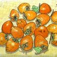 Sさんの庭で実った蜂屋柿(11月)