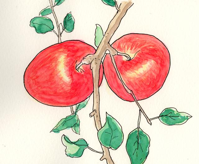 りんご その2  11月