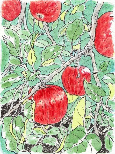 りんご  2009年10月