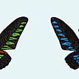 世界の美しい蝶 アカエリトリバネアゲハ
