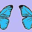 世界の美しい蝶 メネラウスモルフォ