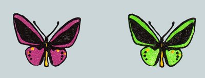 世界の美しい蝶 メガネトリバネアゲハ