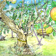 長野県喬木村のりんご畑 9月