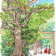 クスノキ 熱田神宮