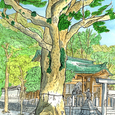 クスノキ 瀬戸市・八王子神社 12月