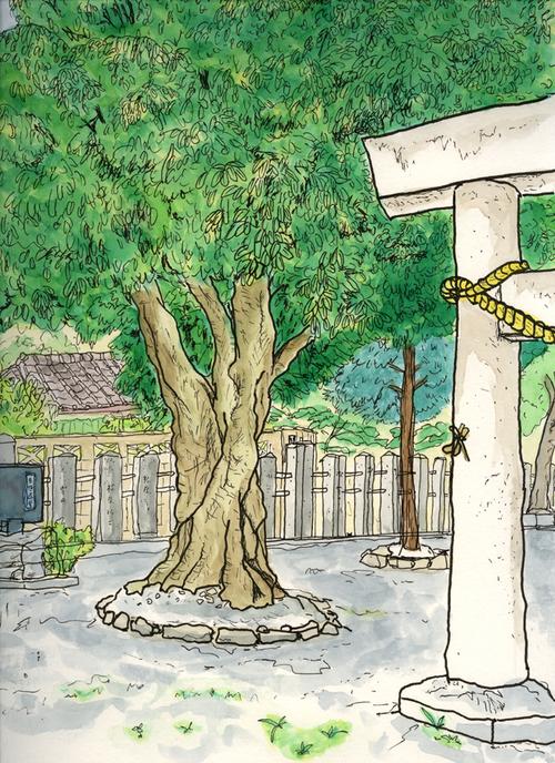 クロガネモチ 尾張旭・一之御前神社 9月